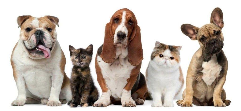 la teva mascota i el paviment de casa teva