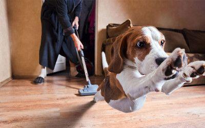 Tens una mascota i vols fer una reforma? Això t'interessa!